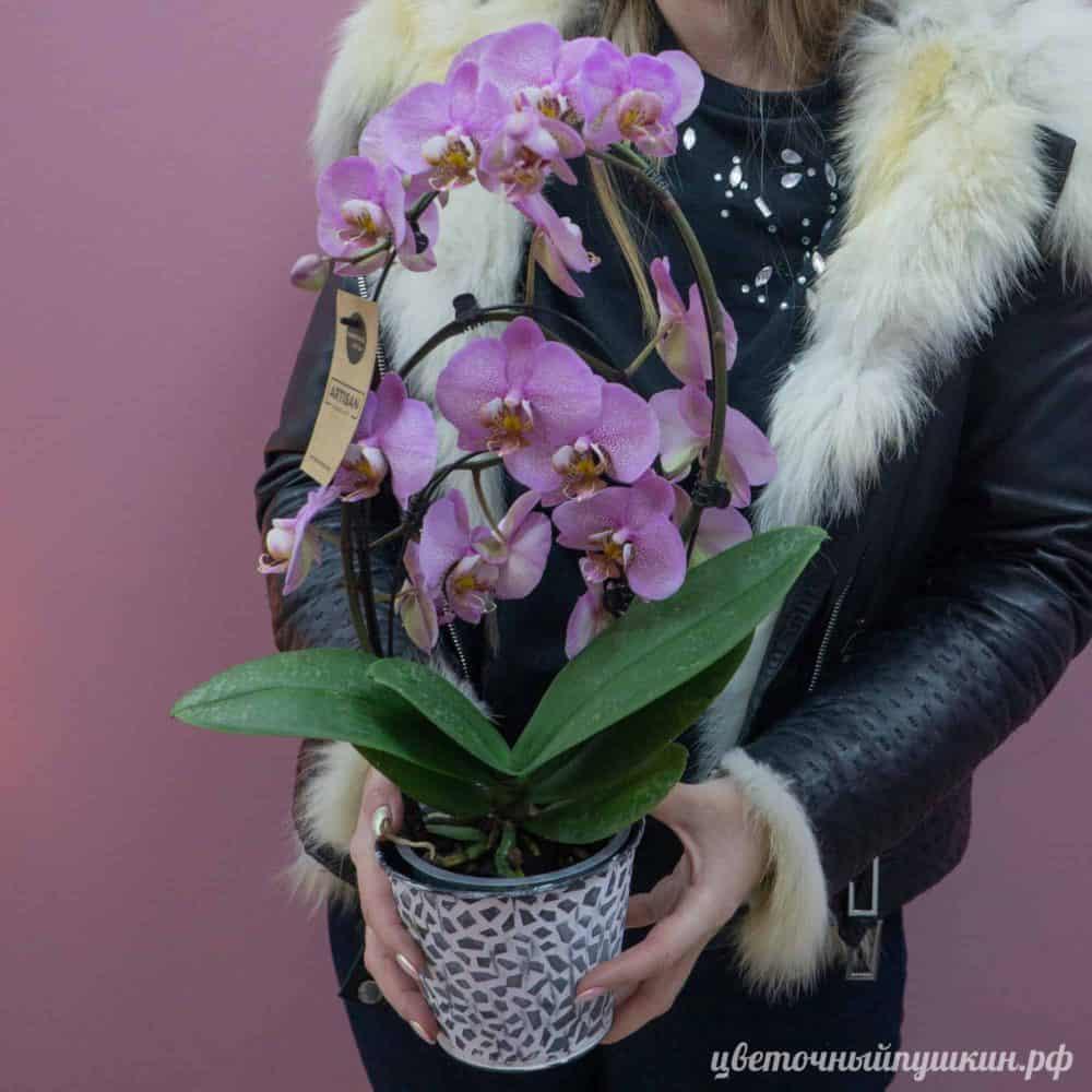 сиреневая-орхидея-горшок